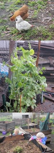 comm garden collage 2