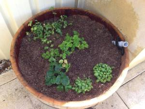 wine cask wicking bed_1