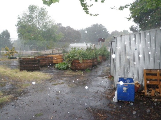 cropped rain